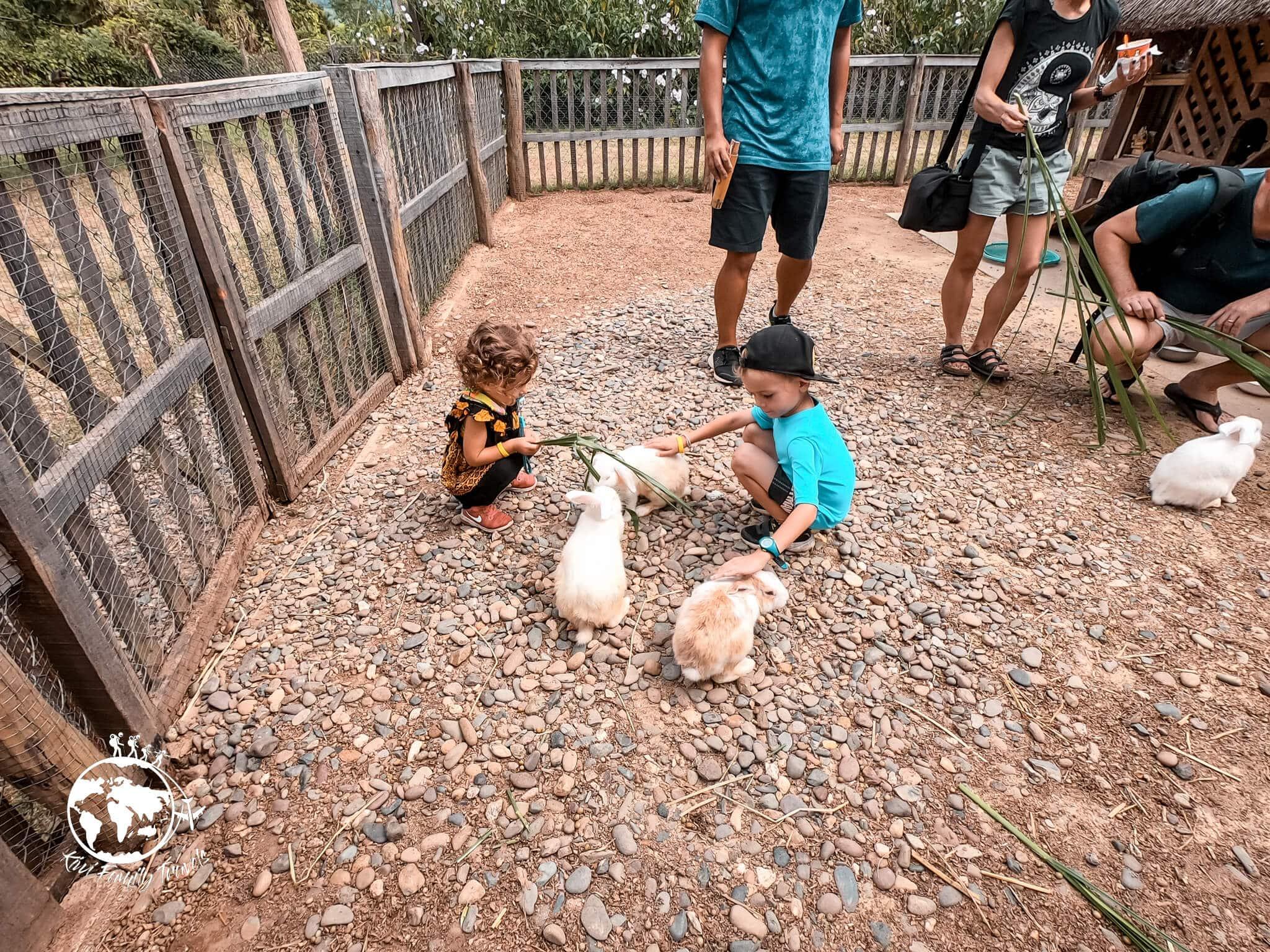 Logan et Théa qui donnent à mangé aux lapins